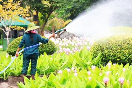 arroser plantes: Arrosage des plantes