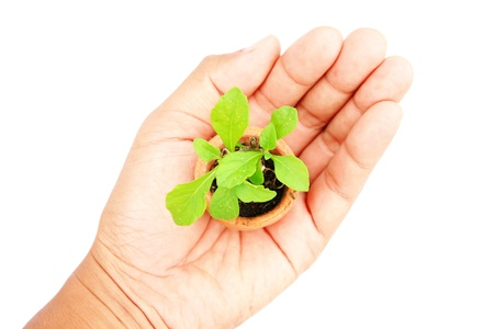 young plant in hands on white background Stock Photo