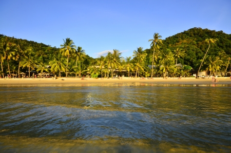 Coconut Tree on the Beach,Koh Chang Thailand  photo