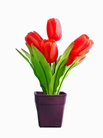 osolated: Tulips osolated on white background