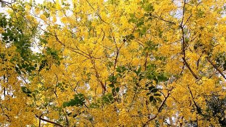 yellow: Yellow treetops.