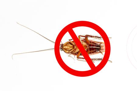 Cockroach Free Zone