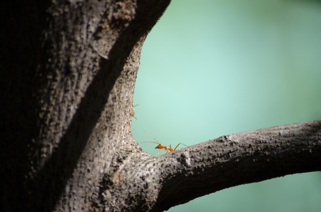 Ants on the tree Imagens
