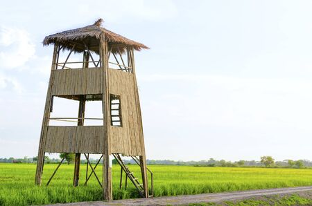 Bamboo tower and view of rice farming greenery