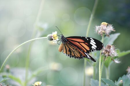 Closeup beautiful butterfly on flower in garden Stockfoto