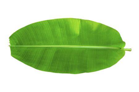 Jeden liść bananowca na izolat i białym tle