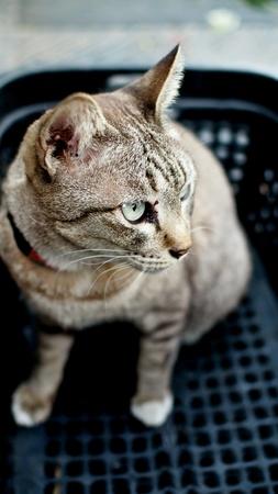 silver: Tricky Cat on Basket