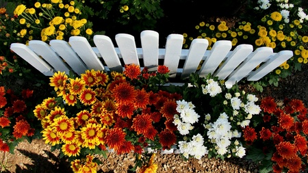 fence: Flower colors are on the fence