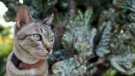 silver: Tricky Cat
