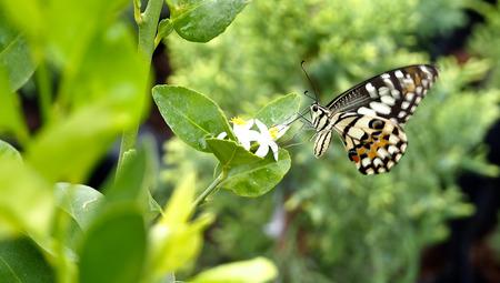 silverline: Butterfly Sucked The Flower
