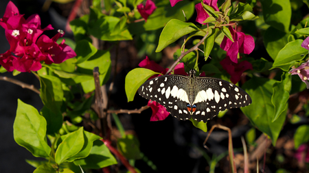 silverline: Butterfly Standing on Flower Stock Photo