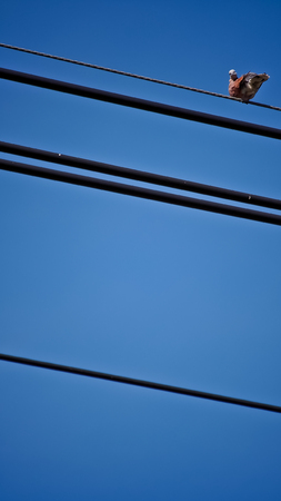 silverline: Dove looked back on The Cord Stock Photo