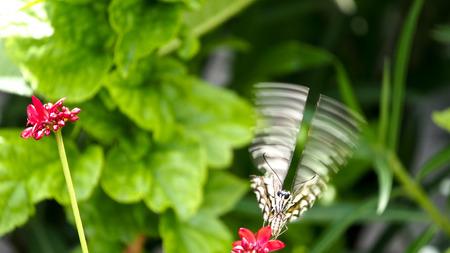 silverline: Movement of Butterfly