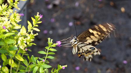 silverline: Motion of Butterfly
