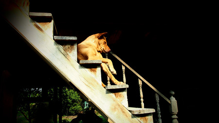 Brown Dog Sitting on Old Wooden Stairs