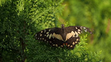 silverline: Movement of Butterfly in The Garden