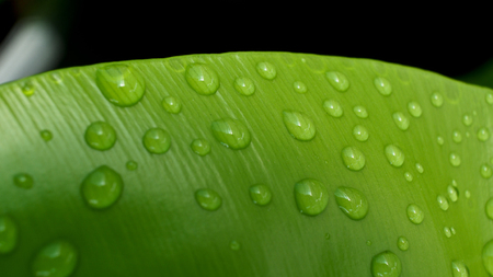 epiphytic: Water Drops on The Big Green Fern Stock Photo