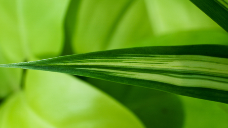tip: Spider Plant Leaf Tip on The Ground