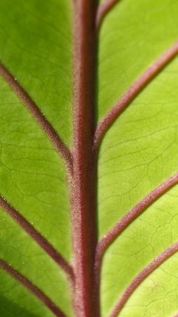 assort: Stem Red Leaf in The Garden
