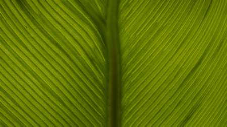 epiphytic: Texture of Green Fern Big Leaf Stock Photo