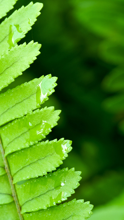 rains: In The Side of Green Fern Leaf After Rains