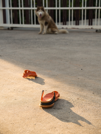 naughty or nice: Dog Bites of a Orange Shoe