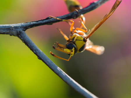 The Moment of Wasp in The Branch