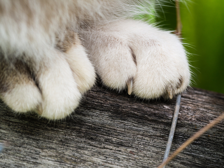 Grey Cat Paws Standing in Narrow Wooden Stock Photo