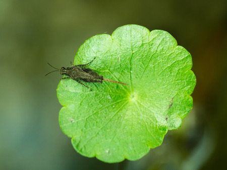 Cricket on The Green Leaf