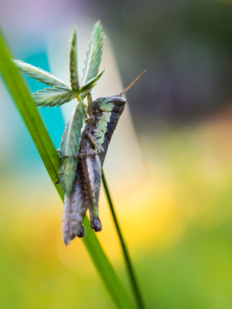 unwanted flora: Grasshopper on The Unwanted Flora