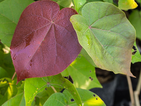 jainism: Floral of Green Red Bo Leaf