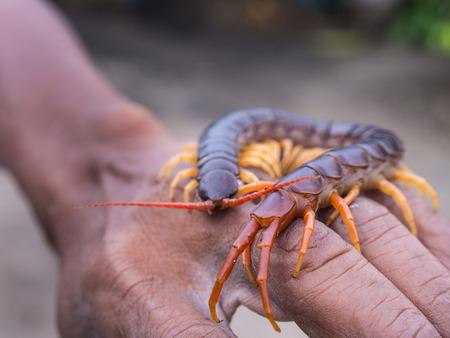 lombriz de tierra: Centipede caminó en mano trabajador