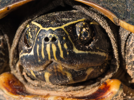 The Turtle Shell in The Tortiseshell