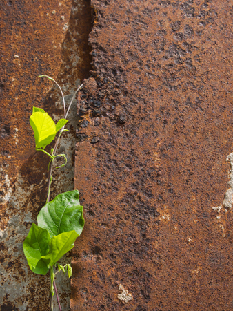 unwanted flora: Unwanted Flora on The Old Rusty Metal Sheet