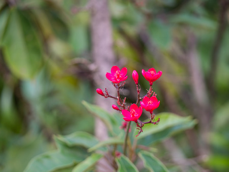 trapped: Cobweb Trapped by Red Flowers