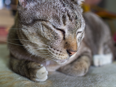 shiver: The Tabby Cat Crouching with Lethargy