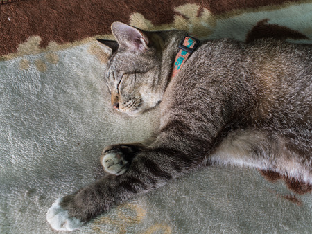 seeping: The Tabby Cat Seeping  with Lethargy