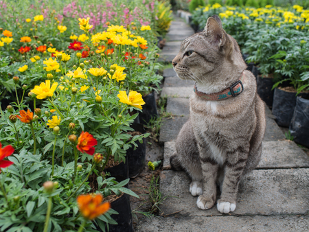 shiver: Grey Cat in The Flower Garden