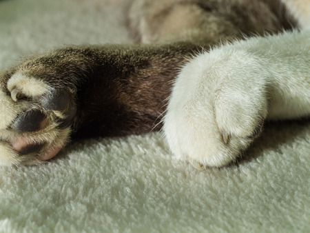 shiver: Legs of Grey Cat on The Carpet