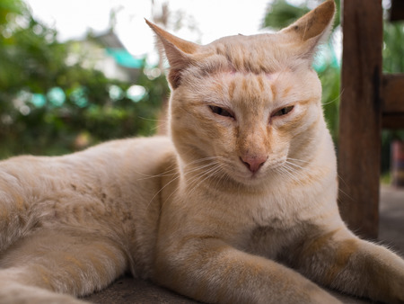 Stray Cat Yellow White Striped Head Notch Relaxing Stock Photo