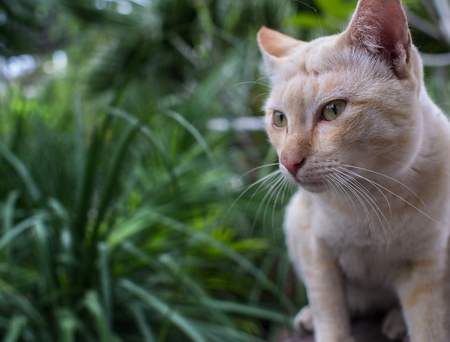 Stray Cat Yellow White Striped Head Notch Looking Stock Photo