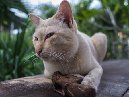 Stray Cat Yellow White Striped Head Notch Sleeping with Old Hammer Happy