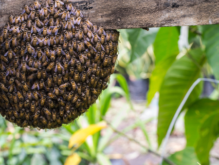 creating: Bee Hives are Creating Together in The Garden