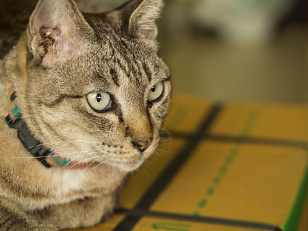 shiver: Grey Cat Sitting on The Box in The House Stock Photo