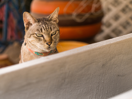 drowsy: The Gray Cat is Sitting and Drowsy