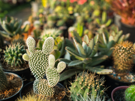 The Cactus is Shaped Like a Doll with Rabbit Ears