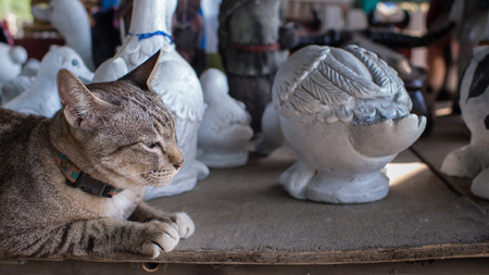 shiver: Tabby Cat Lying with Animal Dolls