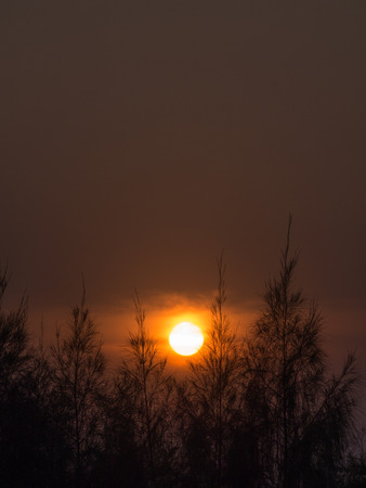 The Sun Behind The Pine