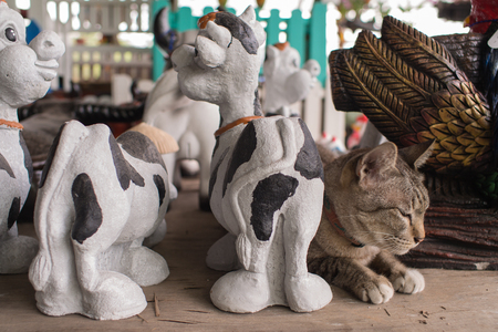 shiver: Tabby Cat Mixed with Animals Dolls