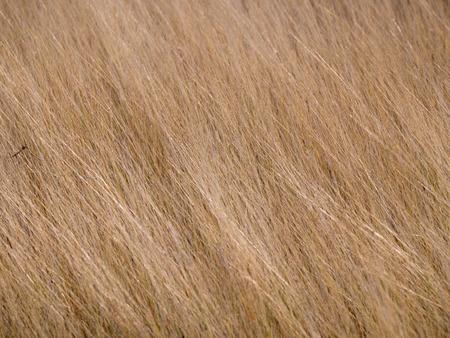Dry Light Brown Meadow in Summer